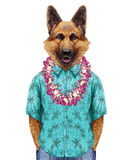 Portrait of German Shepherd in summer shirt with Hawaiian Lei. Hand-drawn illustration, digitally colored Royalty Free Stock Images