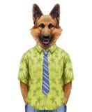 Portrait of German Shepherd in summer shirt with tie. Stock Images