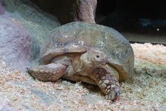 Portrait of a giant tortoise close-up stock photography