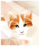 Portrait of the ginger cat. Royalty Free Stock Image
