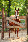 Portrait of ginger horse on farm. Outdoors Royalty Free Stock Photos