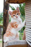 Portrait of  ginger kitten on the nature Stock Images