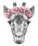 Portrait of Giraffe with floral head wreath. Stock Photography