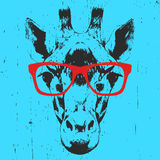 Portrait of Giraffe with glasses. Hand drawn illustration. Vector Royalty Free Stock Photography