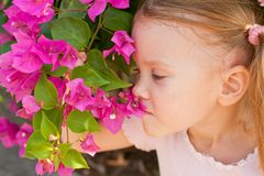 Portrait of a girl on the background of a bush of Stock Photos