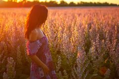 Portrait of a girl in a blooming field in the sun at sunset, the concept of relaxation.  Stock Image
