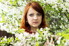 Portrait of a girl in the cherry blossoms Royalty Free Stock Image