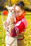 Portrait of a girl. In a colorful knitted scarf with a dog breed chihuahua on hands stock photos