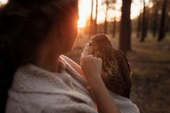 Portrait of a girl and a falcon look at each other in the rays of the setting sun stock image