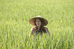 Portrait girl in a straw hat against the backdrop of a rice field in Bali, Indonesia. Portrait girl in a straw hat against the background of a green rice field stock images