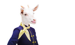 Portrait goat showing tongue in costume stewardess Stock Image
