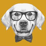 Portrait of Golden Retriever with glasses and bow tie. Hand drawn illustration Stock Photo