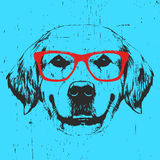 Portrait of Golden Retriever with glasses. Hand drawn illustration. Vector Royalty Free Stock Photos