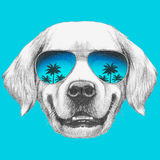 Portrait of Golden Retriever with mirror sunglasses. Hand drawn illustration Royalty Free Stock Images