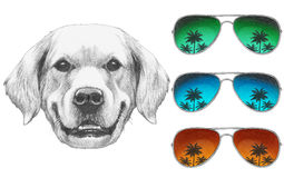 Portrait of Golden Retriever with mirror sunglasses. Hand drawn illustration Stock Photography