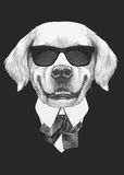 Portrait of Golden Retriever in suit. Hand drawn illustration Stock Images