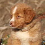 Portrait of gorgeous puppy in nature Royalty Free Stock Photography