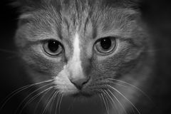 Portrait of a gray cat animal background Stock Photos
