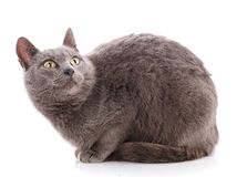 Portrait of a gray cat. Cat without breed. A simple kitten on a white background stock photo