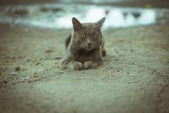 Portrait of a gray cat on gray asphalt Stock Photos
