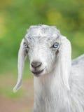 Portrait of gray kid royalty free stock image