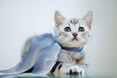 Portrait of a gray striped kitten with a bow stock photo