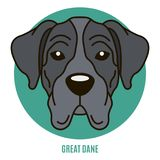 Portrait of Great Dane. Vector illustration in style of flat Stock Images