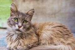Portrait of green-eyed cat Stock Images