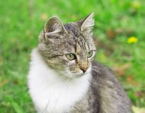 Portrait of green eyed cat Stock Image