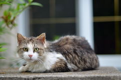 Portrait of green-eyed cat. In nature Royalty Free Stock Photography