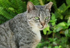 Portrait of grey cat with green eyes Stock Photo