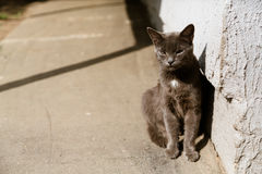 Portrait of grey cat sitting in the sun Stock Images