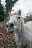 Grey horse in a meadow Stock Photos