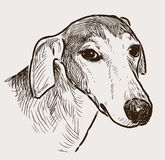Portrait of a greyhound Royalty Free Stock Photo