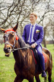 Portrait of the groom on a horse in the spring, apple orchard Royalty Free Stock Photography