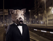 Portrait of groom in suit with wild boar head. Night cityscape on background royalty free stock image