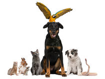 Portrait of group of pets in front of white Stock Photography