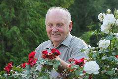Portrait of grower of roses Royalty Free Stock Images