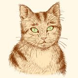 Portrait of hand drawn tabby cat. Stock Image