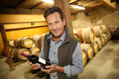 Portrait of handsome man in wine cellar Royalty Free Stock Photos