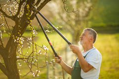 Portrait of a handsome senior man gardening in his garden Royalty Free Stock Images