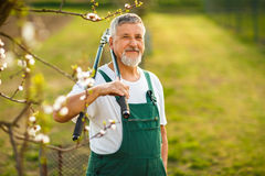 Portrait of a handsome senior man gardening in his garden Royalty Free Stock Photos