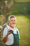 Portrait of a handsome senior man gardening in his garden Royalty Free Stock Photography
