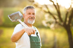 Portrait of a handsome senior man gardening in his garden. On a lovely spring day (color toned image Royalty Free Stock Photography