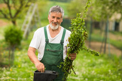 Portrait of a handsome senior man gardening in his garden Stock Photography