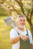 Portrait of a handsome senior man gardening in his garden Stock Image