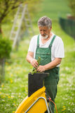 Portrait of a handsome senior man gardening in his garden Stock Images