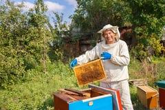 Beekeeper inspecting honeycomb stock photos