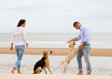 Portrait of a happy couple with dogs Royalty Free Stock Images