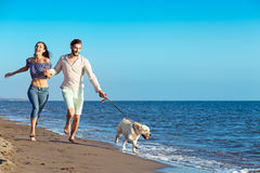 Portrait of a happy couple with dogs at the beach Royalty Free Stock Photography